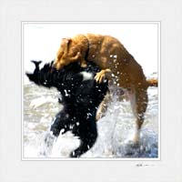 Dogs at Montecito © Gary Hayes 2005